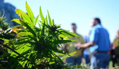 The New Farm Bill Will Have Hemp Industry thriving